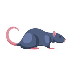 rat pest animal home parasite vector image