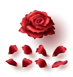 Realistic Glossy Red Blooming Rose and Petals Set vector image