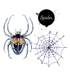 watercolor spider and spiderweb painted isolated vector image
