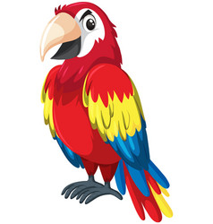 a red parrot character vector image