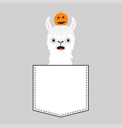 alpaca llama sitting in pocket face vector image