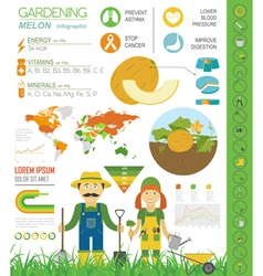 Gardening work farming infographic Melon Graphic vector
