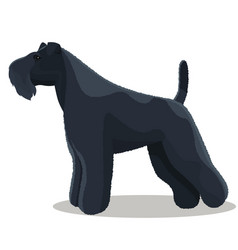 Kerry blue terrier dog vector