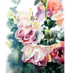 Original watercolor painting of pink roses vector