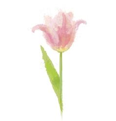 Pink tulip flower vector