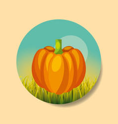 plantation vegetable harvesting pumpkin vector image