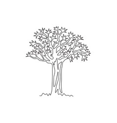 single one line drawing quiver tree forest vector image