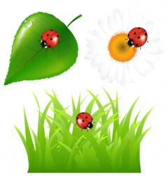 ladybugs at home vector image vector image