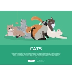 Cat Breeds Cute Pet Animal Set Web Banner vector image