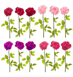 Realistic roses isolated on white vector image