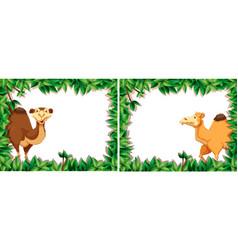 set of camel in nature frame vector image