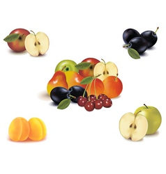 big group with nine fruit vector image