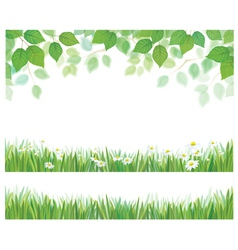 leaves grass flowers vector image