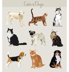 Dogs and cats set Different types vector image vector image