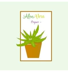 Aloe vera plant in brown pot vector