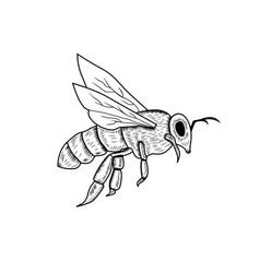 Honey bee vintage drawing logo vector