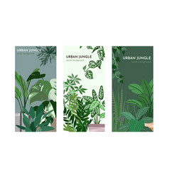 Set three card templates with indoor plants vector