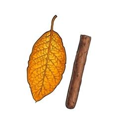 Unlabelled unlit brown Caribbean Cuban cigar vector