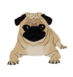 pug image vector image