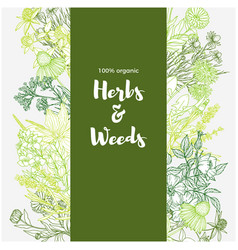 Vertical green banner with color medicinal herbs vector