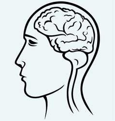 Human brain and head vector image vector image