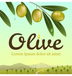 Label of green olives Realistic olive branch vector image vector image