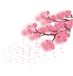 Branches with a blooming pink cherry and not with vector