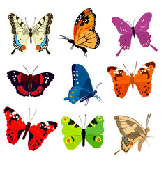 cute colorful butterflies vector image