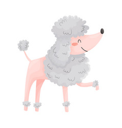 Cute shorthaired poodle on a vector