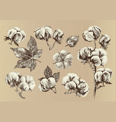 Hand drawn set of cotton branches vector