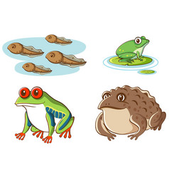 Isolated picture tadpoles and frogs vector