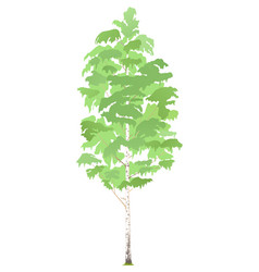 One birch tree isolated vector