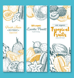 sketch banners of exotic tropical fruits vector image