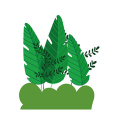 Trees foliage nature bush branches plants isolated vector