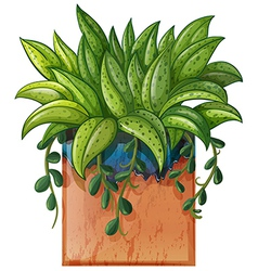 A potted plant vector image vector image