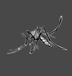 simple design mosquito vector image
