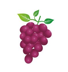 Colorful silhouette of bunch of grapes vector
