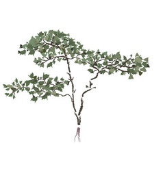 Chinese tree vector image vector image