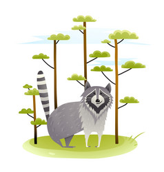raccoon in the wild nature with trees vector image