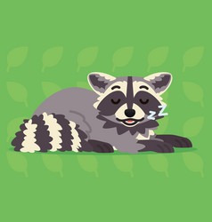 cute raccoon sleeping of a vector image