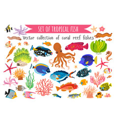 Set corals fish and seaweed in flat style vector