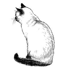 Sketch sitting domestic thai cat vector