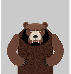 Angry bear standing vector