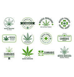 cannabis label medical marijuana therapy legal vector image