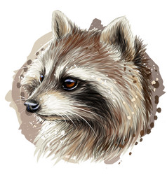 raccoon color graphic portrait a raccoon vector image