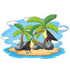 Scene with two toucan birds on island vector