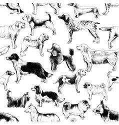 seamless pattern with dog breeds vector image