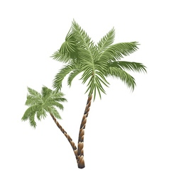 Two Palm Trees3 vector