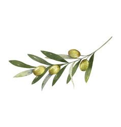 watercolor olive branch with leaves and vector image