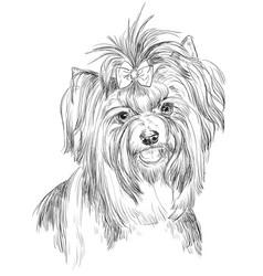 Biewer terrier hand drawing portrait vector